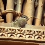 khajuraho-ecureuil-petit